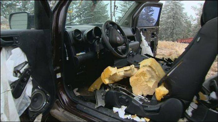 Bears vs Car (15 pics)