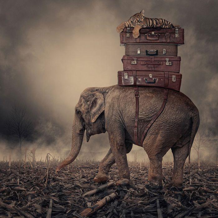 Amazing Photo Manipulations by Caras Ionut (20 pics)