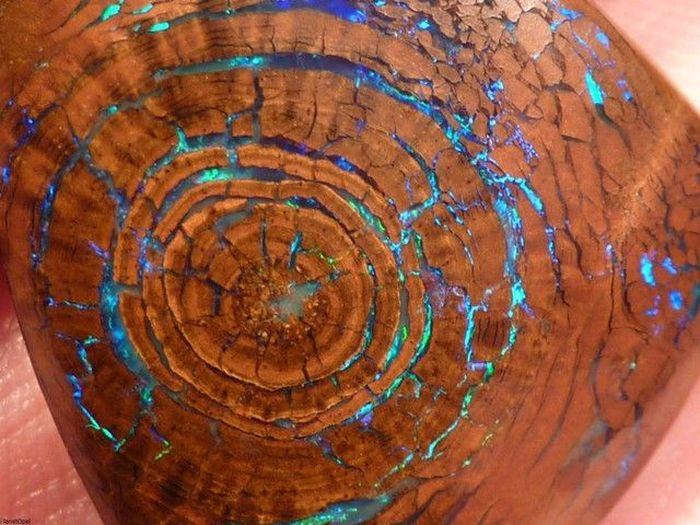 Opalized Wood Boulder Opal (5 pics)