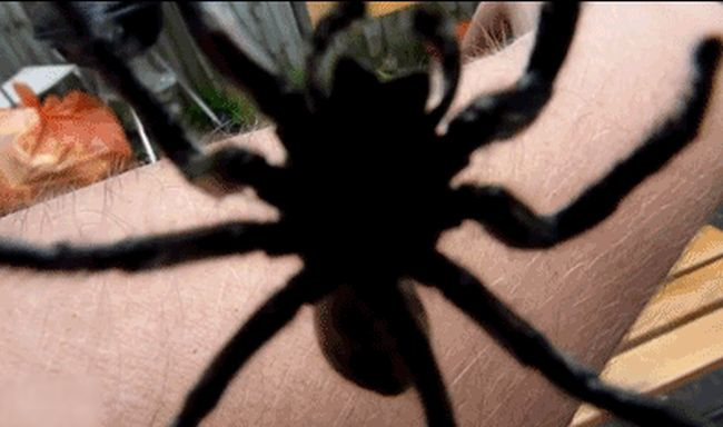 Spiders Gifs (13 gifs)