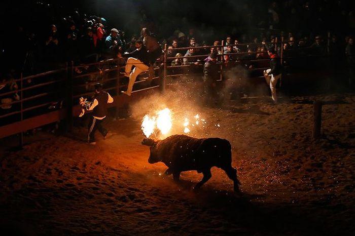 """Fire Bull"" Festival (8 pics)"
