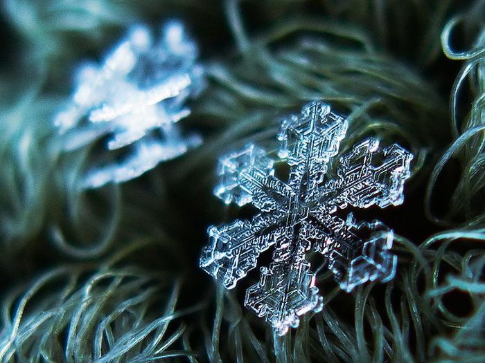 Close-Up Photos of Snowflakes (28 pics)