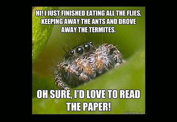 Misunderstood Spider Meme (16 pics)