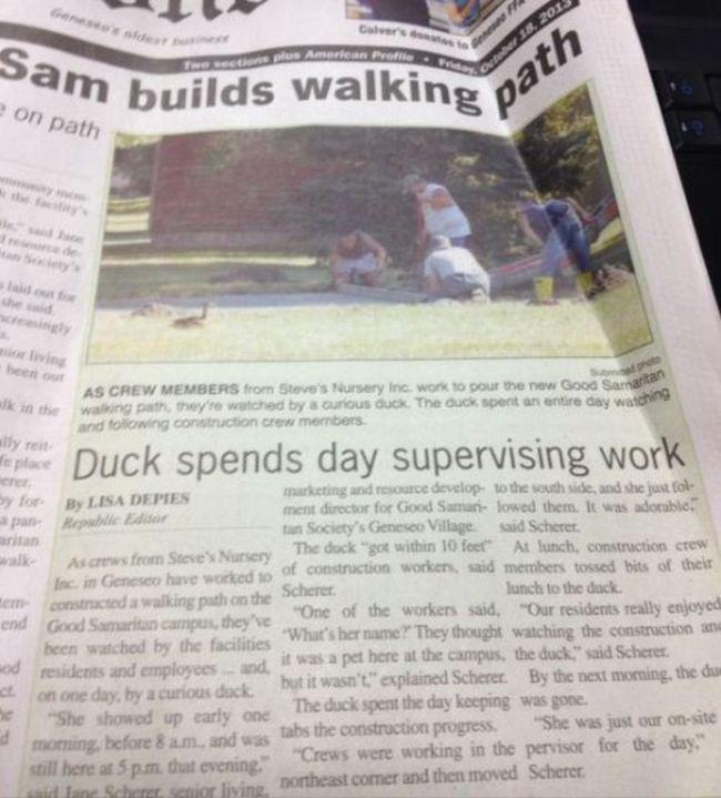 Weird Local News Captions. Part 6 (33 pics)