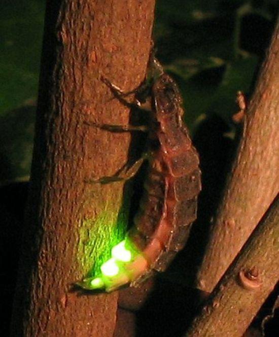 Bioluminescence (27 pics)