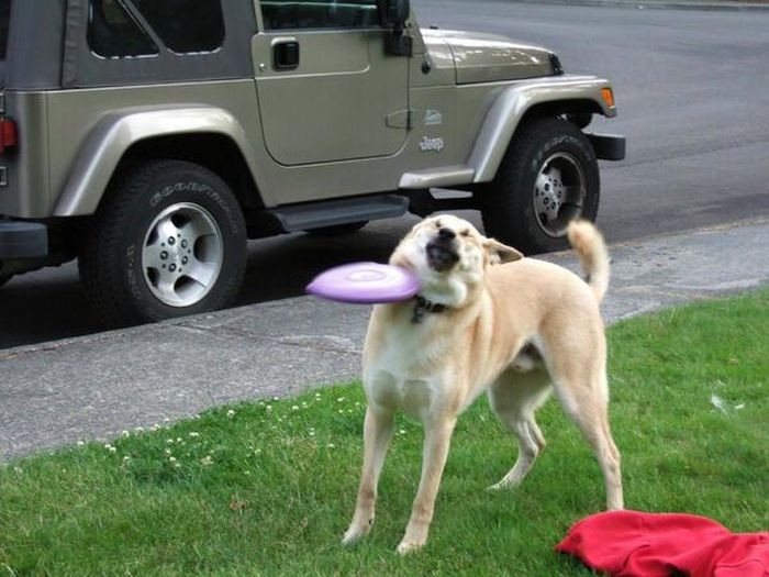 Funny Dogs (41 pics)