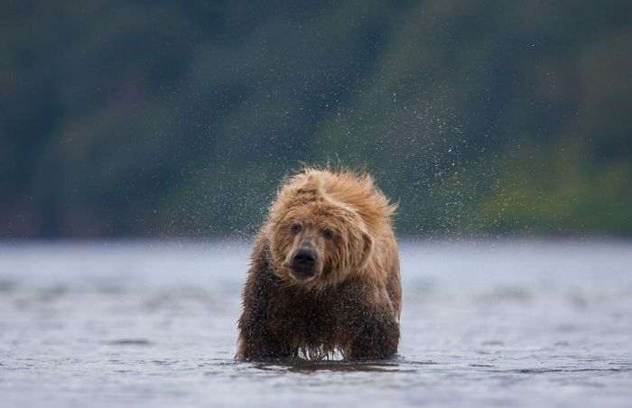 National Geographic Photo Contest 2013 (39 pics)