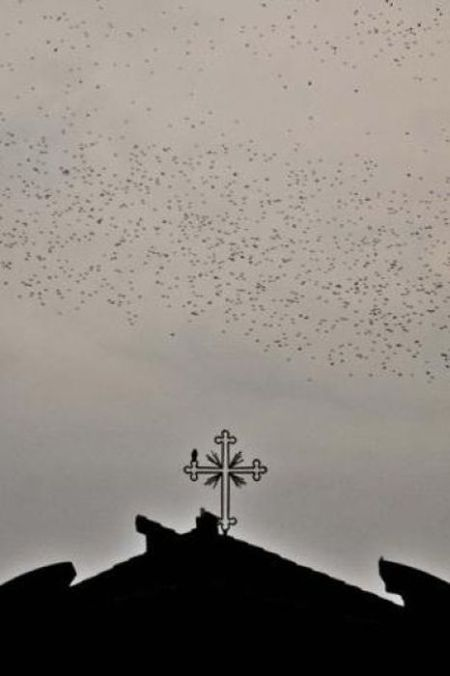 Starlings Occupy Rome (12 pics)