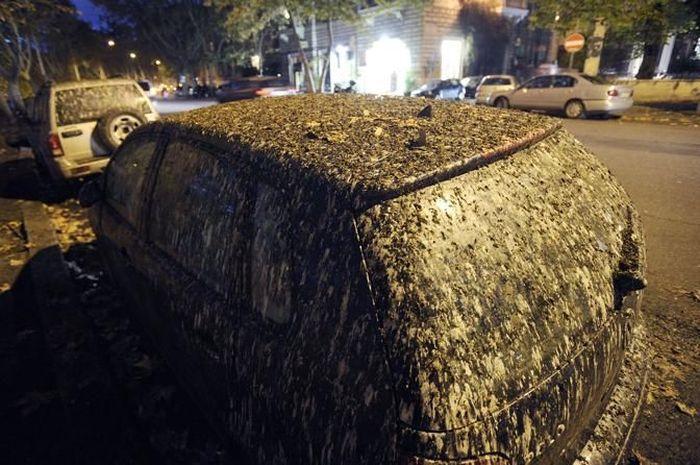 Starlings Occupy Rome (12 pics)