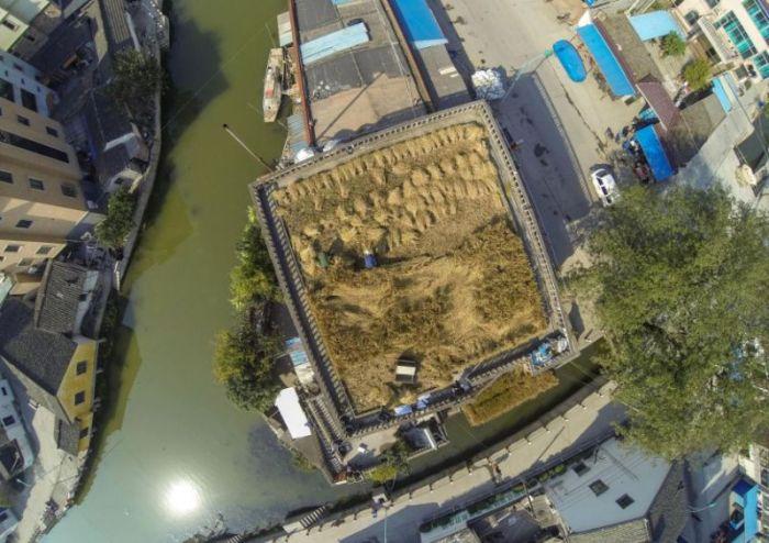 Roof as Farmland (6 pics)