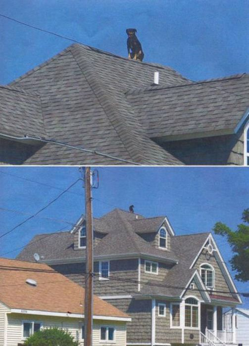 We Will Never Understand Most of This (29 pics)