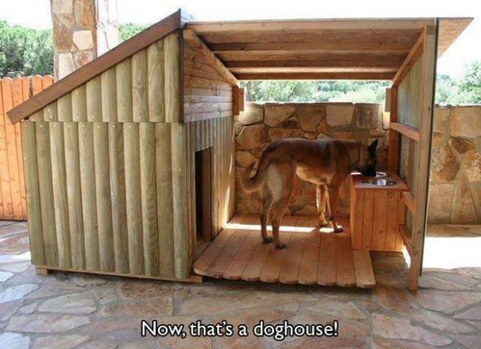 Good Pet Owners (20 pics)