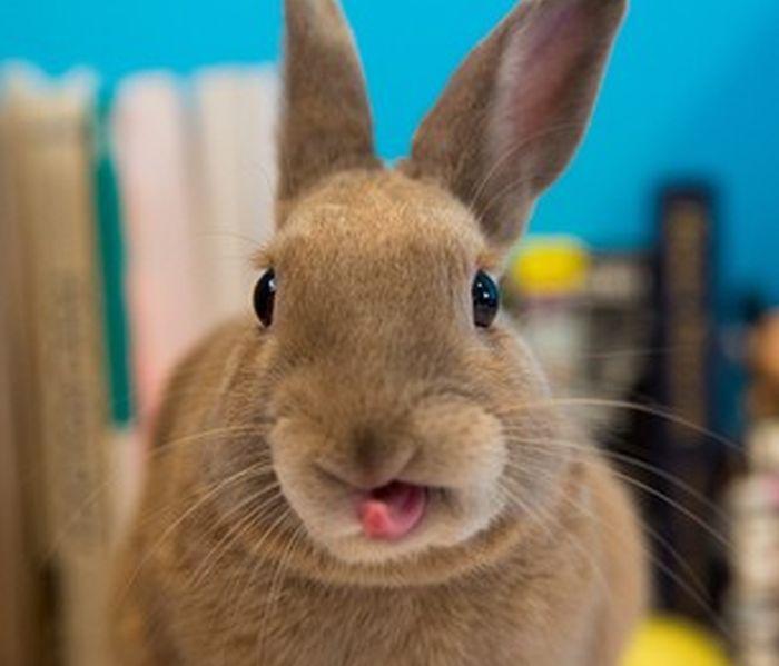 Photos of Bunny Tongues (21 pics)