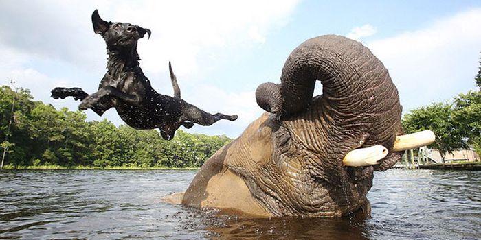 Elephant and a Dog (6 pics)