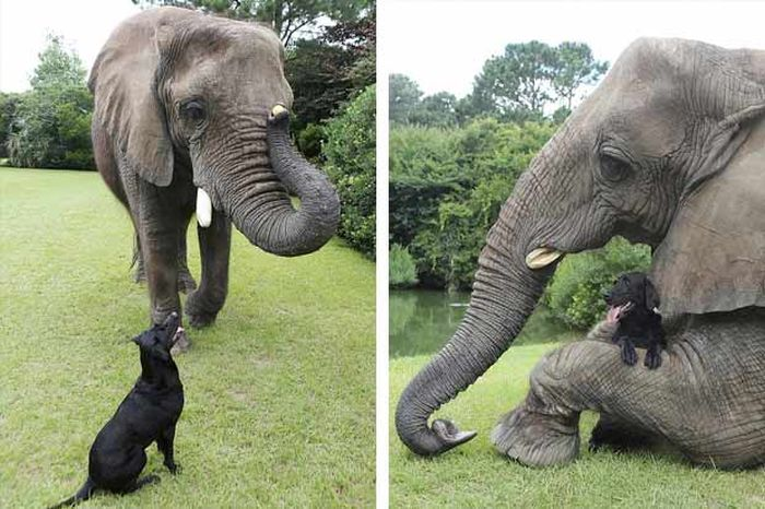 Elephant and a Dog (6 pics)