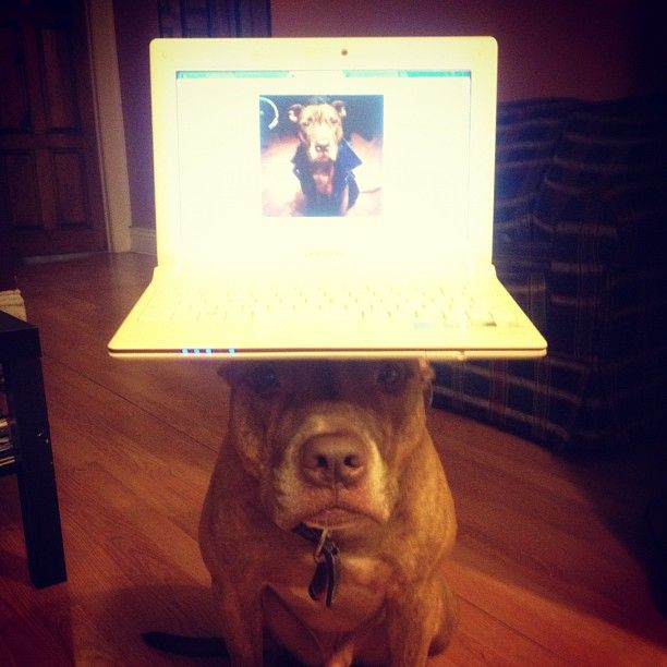 Stuff on Scout`s Head (30 pics)
