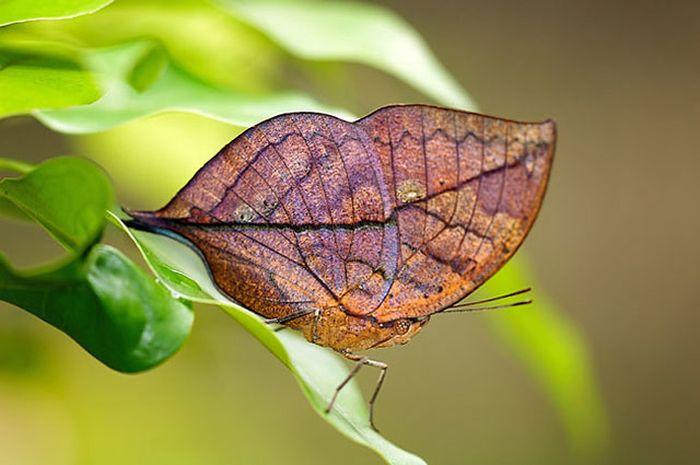 Beauty Of Nature (40 pics)
