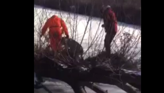 Hunters Save Husky From Drowning in Icy River