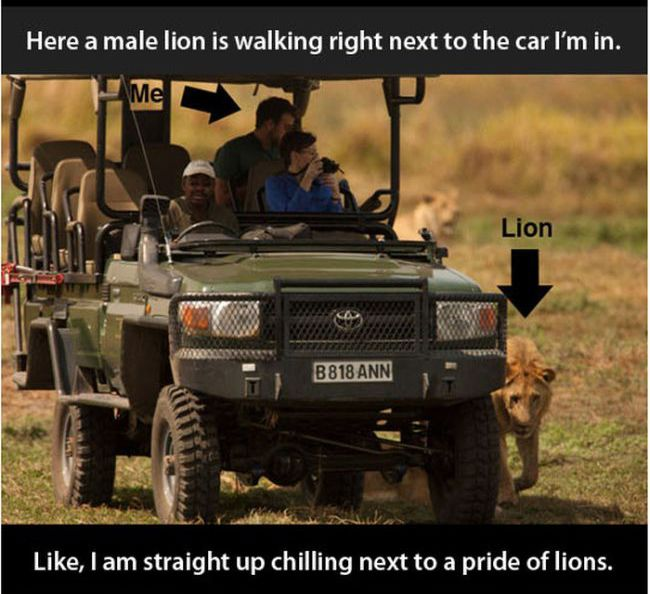 There's No Sport in Killing Lions (14 pics)
