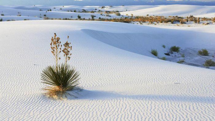 White Sands, New Mexico (12 pics)