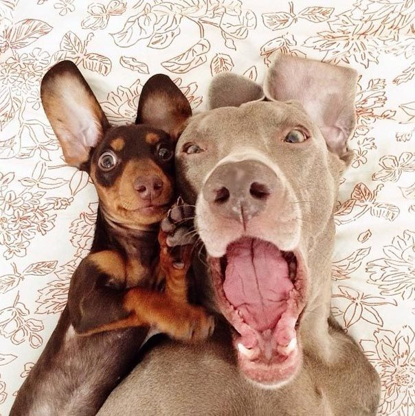 Two Dogs Fooling Around (12 pics)
