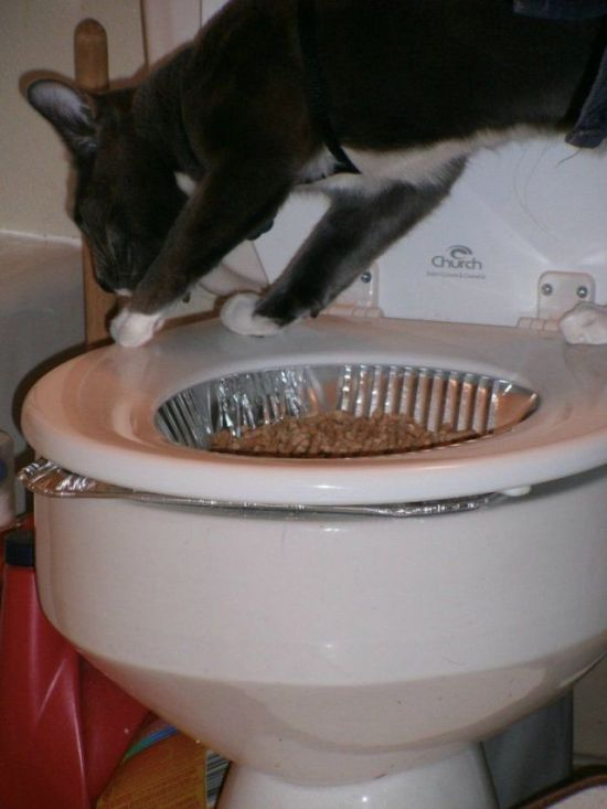 How to Teach Your Cat to Poop in the Toilet (6 pics)