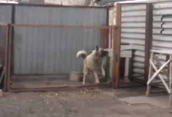 Dog Feels the Beat Like a Boss