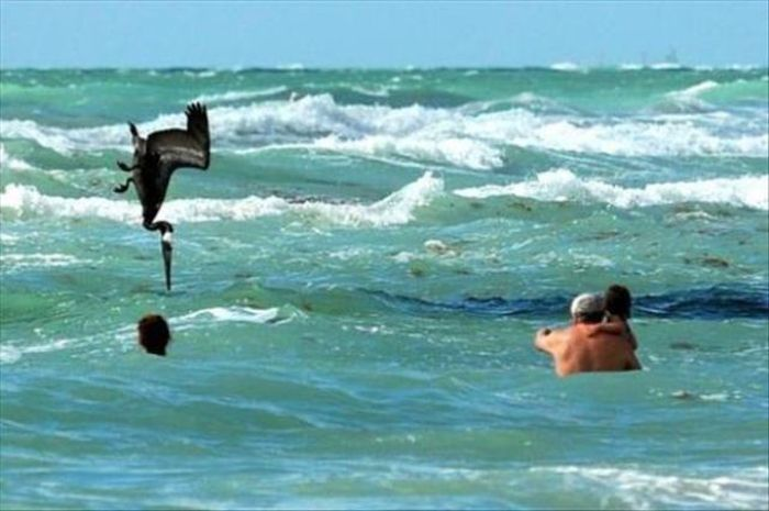 At the Right Moment. Part 31 (50 pics)
