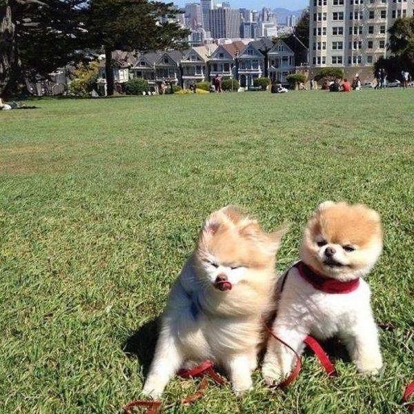Cute Photos (30 pics)
