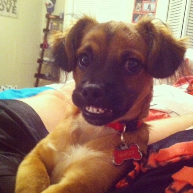 The Most Awkward Dog Photos of the Year (39 pics)