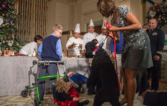 Obama's Dog Sunny Knocked Over a Little Girl (7 pics)