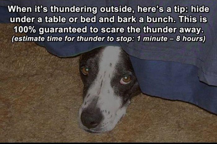 Life Hacks for Dogs (8 pics)
