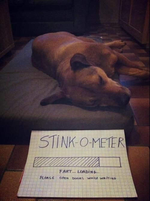 True Pictures About Dogs (42 pics)
