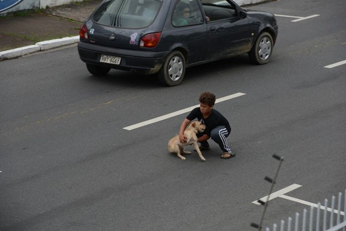 Boy Is Trying to Rescue a Dog (3 pics)