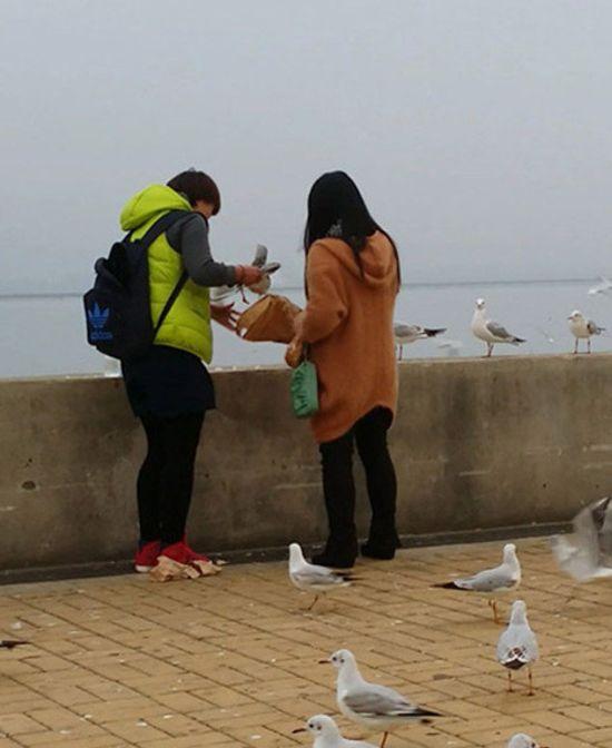 Seagulls for Dinner (7 pics)
