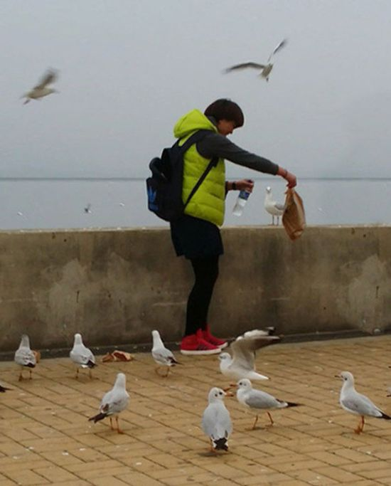 Seagulls for Dinner (7 pics)