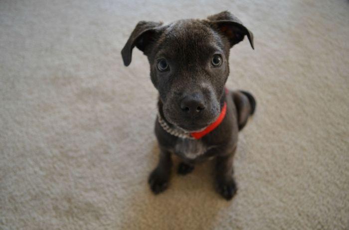 Cute Dogs (97 pics)
