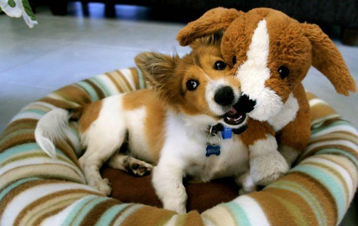 http://cdn.acidcow.com/pics/20131211/cute_dogs_59.jpg