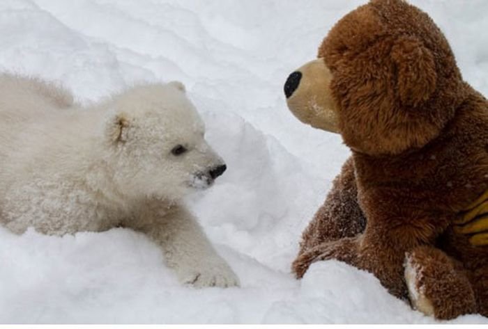 Two Teddy Bears (7 pics)
