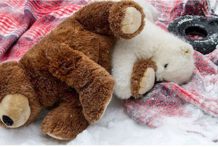 Two Teddy Bears (7 pics)