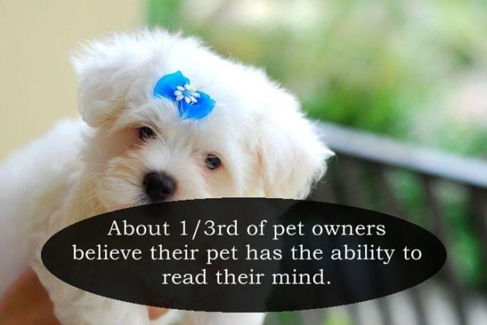 Fun Facts. Part 14 (25 pics)