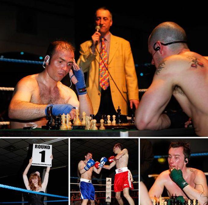 Chessboxing (22 pics)