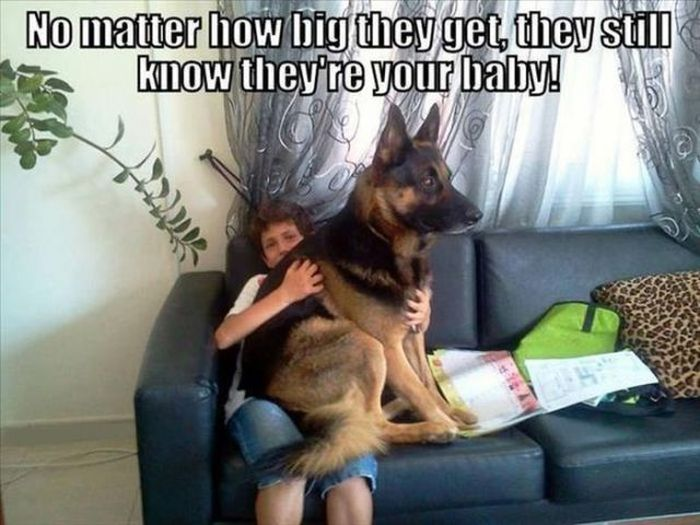 Funny Dog Pictures (42 pics)