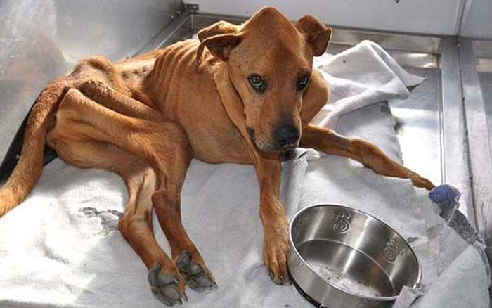 Another Dog Rescued. Great Job (10 pics)
