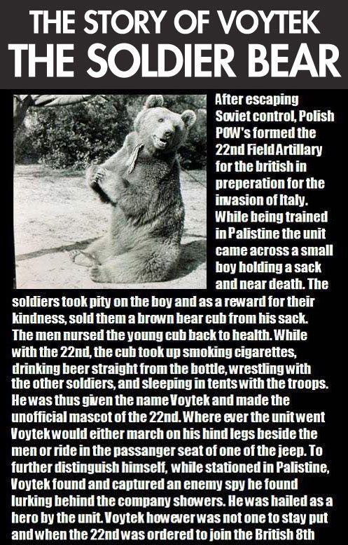 Voytek, the Soldier Bear (3 pics)