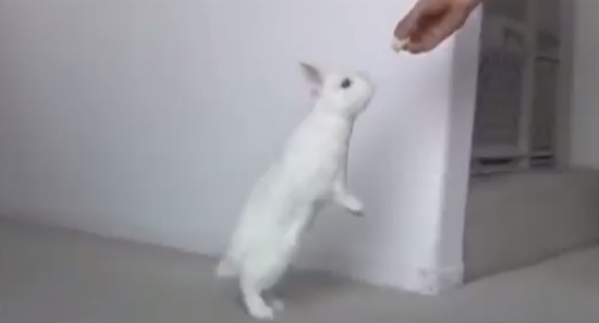 Cute Animals That Can Walk Like Humans