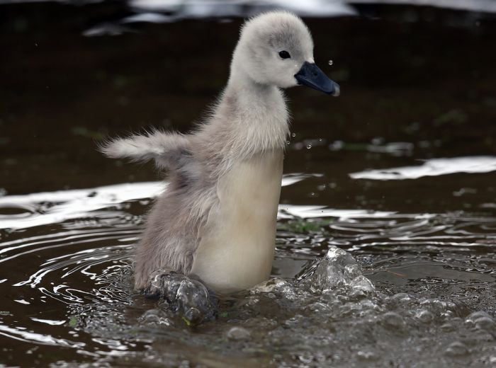 The Best Baby Animal Photos of 2013 (40 pics)