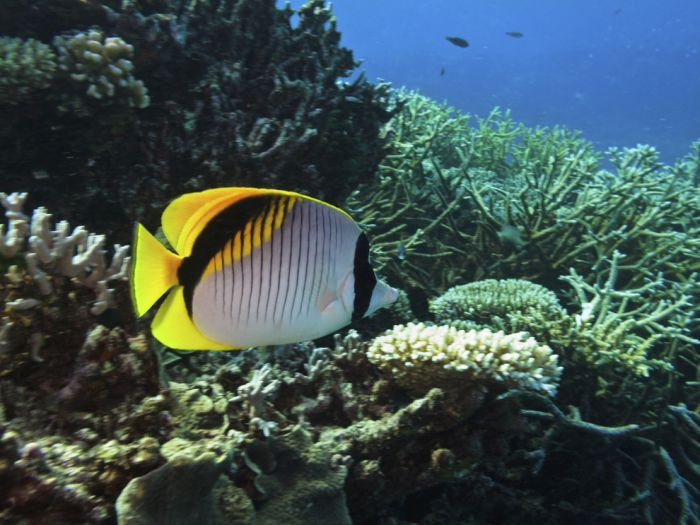 The Great Barrier Reef (34 pics)