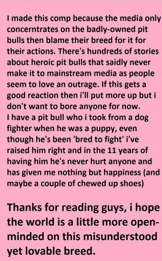 These Pit Bulls Are Heroes (6 pics)