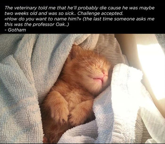 Story of a Cat (13 pics)